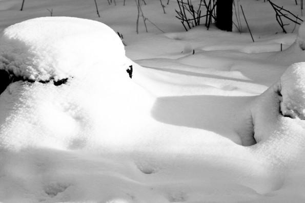 Crisp Snow