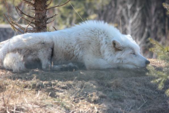 Sleeping Dogs 2