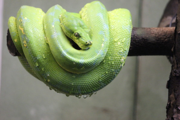 Sleeping Snake