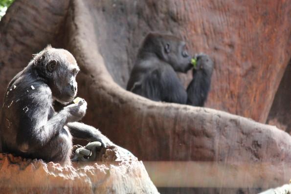 Not Monkey Business